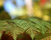 Fern Photography Macro  photography Nature photography woodland green fern botanical decor art   Fine Art Photography Print