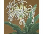 Spider Lily, Medium Giclee Print