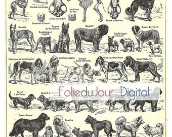 """gift Dog Digital file French vintage dictionary plate - 8.5 x 11"""" - Instant Download"""