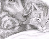 Custom Pet Portrait. A pencil drawing of your dog, cat, bird, guinea pig, rat, iguana etc. I can draw detailed illustrations of any animals