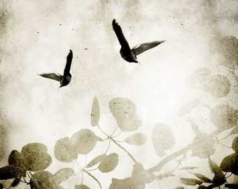 Photo Collage Grunge Art Download, bird collage,White, Grey, Paloma, Sand Color, Bird Art, Blackbird, Soft and Moody, For Teenager Wall Art,