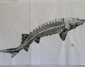 STURGEON (Chou Zame)  Original Gyotaku - traditional Japanese fish art by dowaito (1)