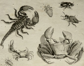 1795 Antique print of CRABS. Crab. SCORPION. Marine Animals. 219 years old nice copper engraving.