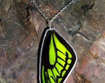 FREE SHIPPING  Real Green Birdwing Butterfly Wing Encased in Hand Cut Glass and Soldered Pendant Necklace