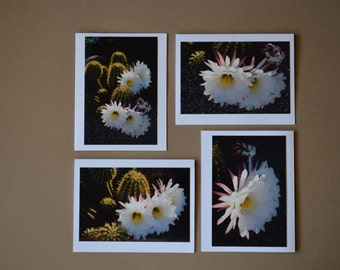 Argentine Giant Cactus: Set of 4 Blank Photo Note Cards