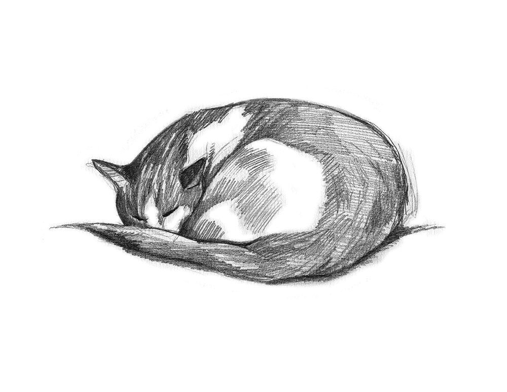 Cat Drawing Pencil Drawing Of Cat Gift For Cat Lover Cat