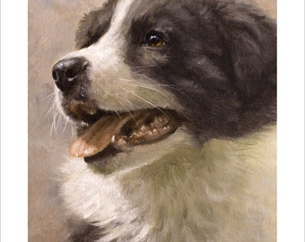 Border Collie Puppy Dog Portrait by award winning artist JOHN SILVER. Personally signed A4 or A3 size Print. BC006SP