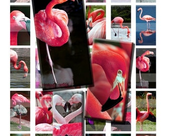Pink Flamingo Tropical Birds Wild Zoo Animal Digital Images Collage Sheet 1x2 inch Rectangles Domino Commercial INSTANT Download RD49