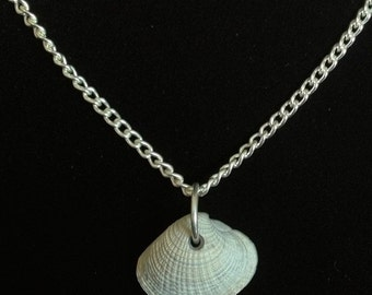 """Shell pendant necklace on 18"""" silver chain"""