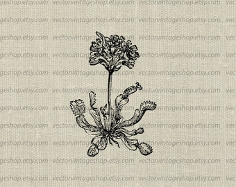 Fly illustration etsy venus fly trap vector graphic plant flowering carnivorous clipart instant download printable vintage style ccuart Choice Image