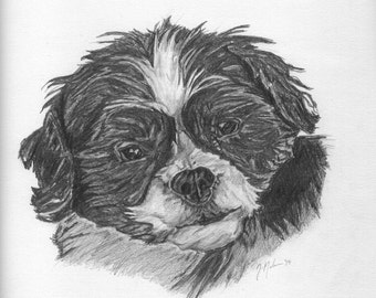 CUSTOM pencil pet portrait. Made to order and drawn from your photo. 9 x 12. Custom pet drawing. Gift. Cat, kitten, puppy or dog drawing.