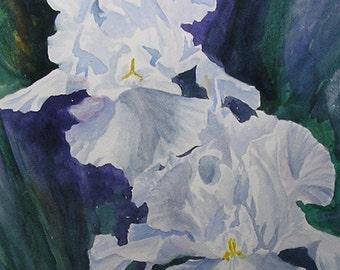 White Irises............Original Watercolor Painting