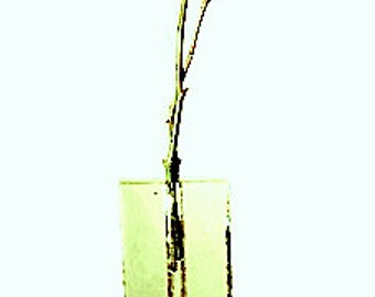 Solid Textured Clear Rectangular Glass Bud Vase