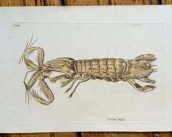 c. 1790 LOBSTER PRINT - crustacean original antique sea life ocean fauna engraving
