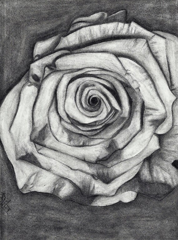 Fine Art Giclee Print of Original Drawing The Rose Amber Elizabeth Lamoreaux Surreal Sketch Grayscale Gray Grey Roses Flower