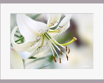 White Tiger Lily PRINT and CANVAS gallery wrap Black and White flower wall decor artwork Purple bedroom Fine photo Her elegant home bathroom