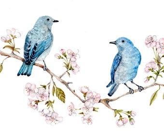 "Mountain Bluebirds on Sakura Branch - Original Watercolor  8.5""x11'' wedding, bridal shower, blossom, cottage, art nature cherry tree"