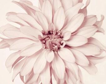 Flower Photography, Fine Art Print, Dusty Pink, Girl Nursery Decor,  Floral Photo, Fine Art Photograph, Dahlia Photo, Minimalist Print