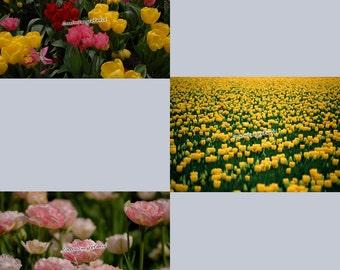 Flower Set 12