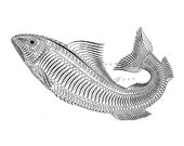 Black and White Fish Illustration...pen and ink .....digital print no. 604