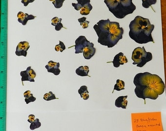 Real Pressed Dried Flowers 25 Pansy or Viola in one Variety Ready for your project Craft supply
