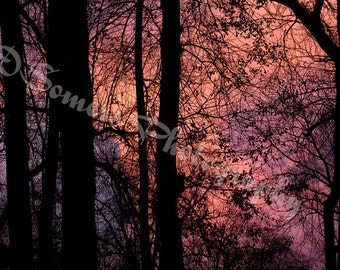 DazzleMe  Photo 0419 DS Abstract Tree Sunset 810