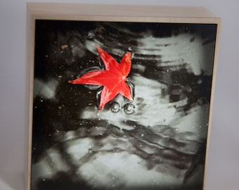 Red Leaf Photograph on Natural Wood--Fall's Red--4x4 Fine Art