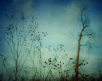 Dreamy photography . dark art . minimal landscape . spring . blue black . nature photograph . art print . field . modern decor . wall decor
