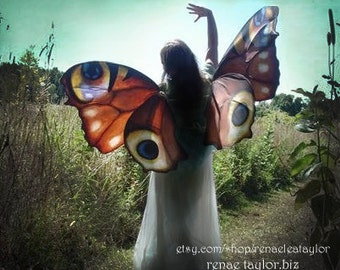 Custom Faerie wings by Renae Taylor  (Extra Large REAL BUTTERFLY)