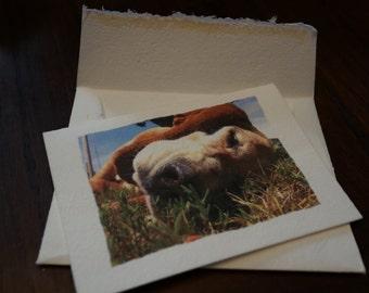 "Tree Free Blank Card - ""Dog Days"""