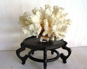 Vintage Sea Coral Specimen White Branch Coral Beach House Cottage decor Curio Cabinet Natural Object