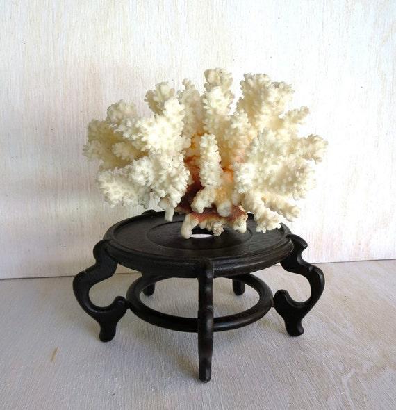 Vintage Sea Coral Specimen White Branch Coral Beach House Cottage decor Curio Cabinet Natural Object