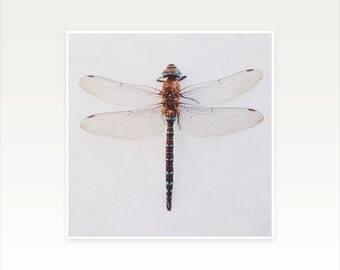 Dragonfly Art, Nature Photography, Minimalist Art - Dragonfly