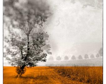 Tree Photography, Wall Decor, Landscape Photo, Wall Hanging, Wall Art, Orange Print, Modern Decor, Nature Print