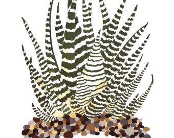 Zebra Plant (Haworthia) Card