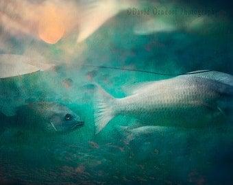 SKYFISH, 8x12 Fine Art Print, Marine Art, Fish, Ocean decor, Marine Photography