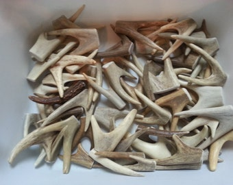 Forked Drilled Antler Tips or Points for Pendants Etc- 1 Piece- Pick Your Size
