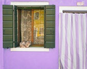 Cat Photography, Italy Photograph Window House Mauve Purple Plum Lavender Violet Lilac Feminine WAll Art ita103