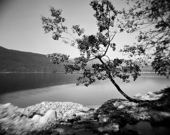lonely tree photo, black white tree photo black white landscape, spring photo, nature photo, summer photo, landscape, lake, tree, shore, zen
