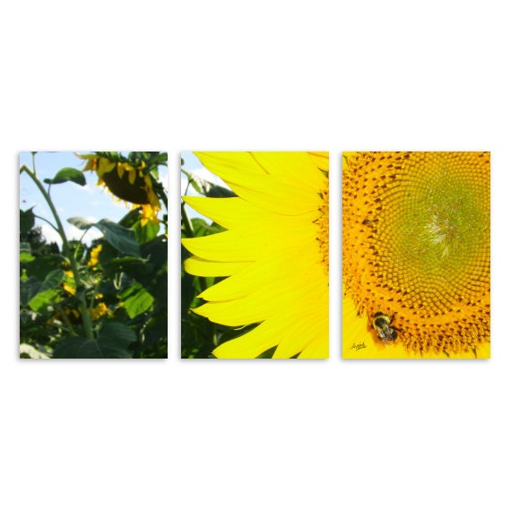 Sunny the Sunflower Bee fine art photography prints, 5x7 inch triptych style, set of 3 prints, sunflower, bee, buzz, kitchen decor,sunny art