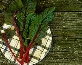Rhubarb Red Swiss Chard Seeds