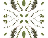 Herbs Collage. 8x10. Fine Art Photographic Print. Collage. Nature. Kitchen. Garden. Gifts for her