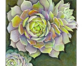 SUCCULENT, HENS & CHICKS Print of Colored Pencil Drawing
