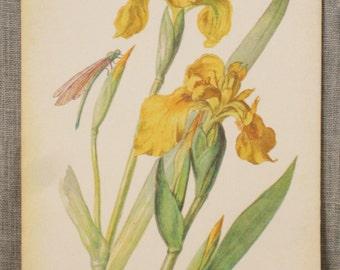 Botanical Book Plate , Antiqued , Book Plates , Ephemera , Print , Wild Flowers , Art Supplies , Craft Supplies , Flowers , Illustration