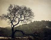 Tree in Silhouette - Jerusalem Hills - Israel Photography - Landscape Art - 8x12 fine art photo
