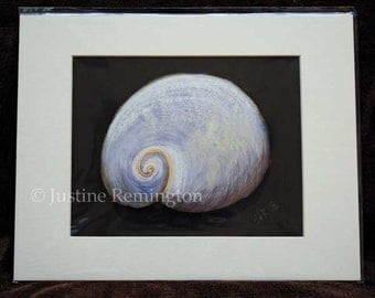 Babys Ear Shell - giclee reproduction print off-white mat