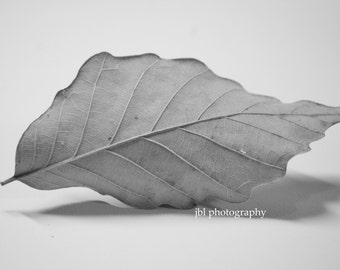 "Nature Photography, Black and White Photography, Nature Still Life, Leaf, Macro Photography, ""Quiet Waves"", Simple Modern Decor, Fine Art"