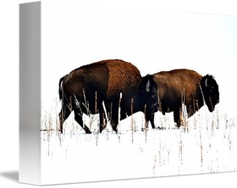 Any Print Wrapped Canvas, Woodland, Wildlife Photography, Fine Art Photography