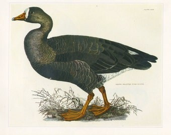 Vintage Goose Print or Book Plate CLEARANCE