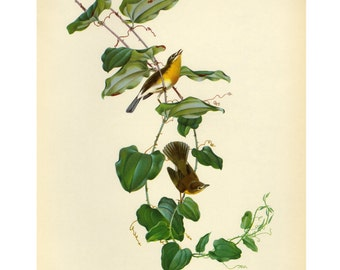 Vintage Yellow Chat by Athos Menaboni Bird Book Plate SALE Buy 3, get 1 free